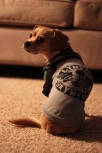 Kona's Lynyrd Skynyrd shirt