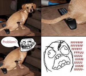 Kona sitting on the TV remote