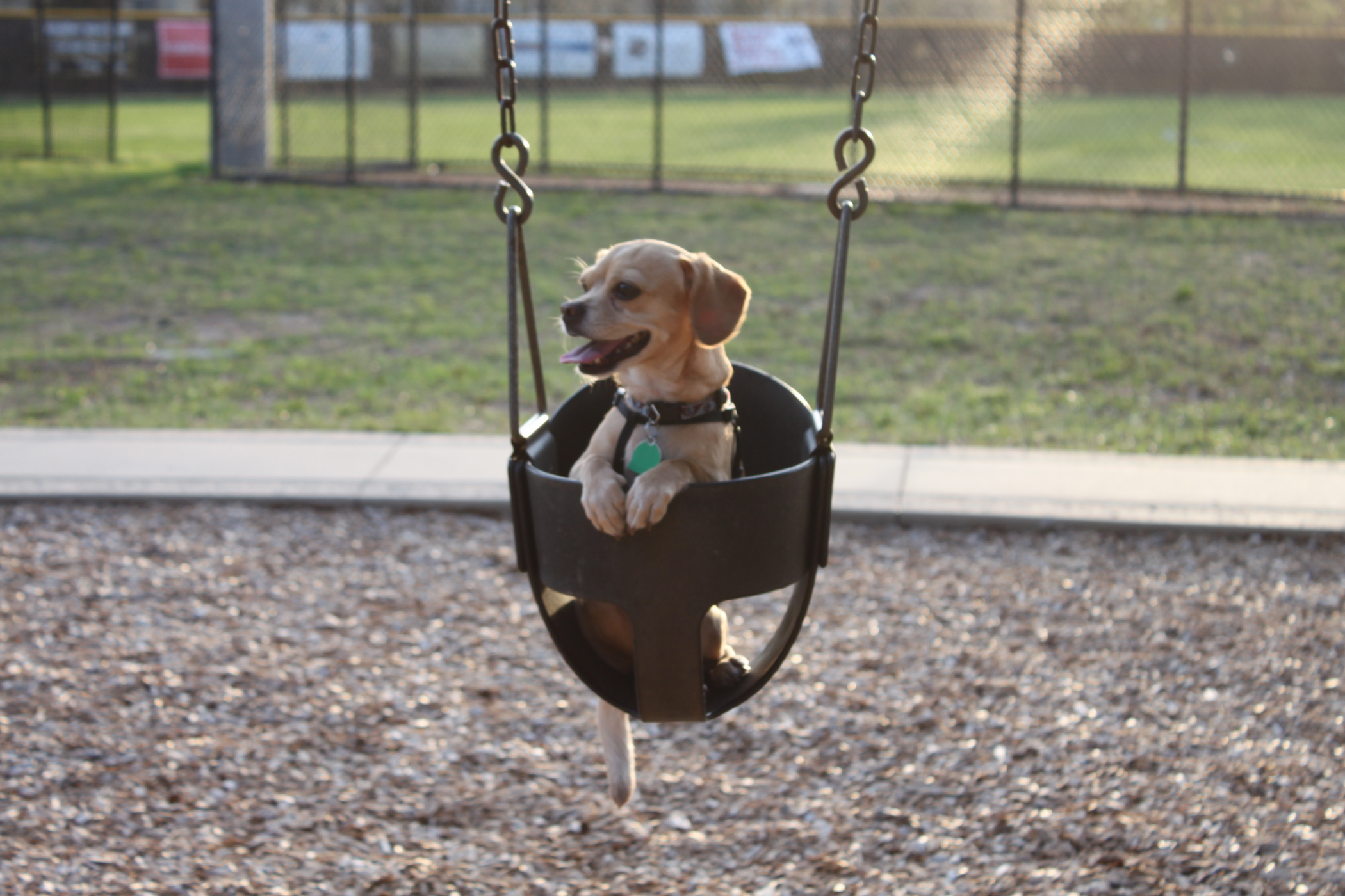 chilling in the swing
