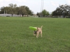 playing fetch with the frisbee