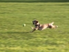 chasing the ball
