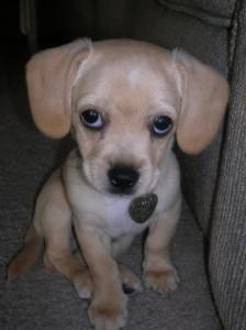 Kona's cute puppy face