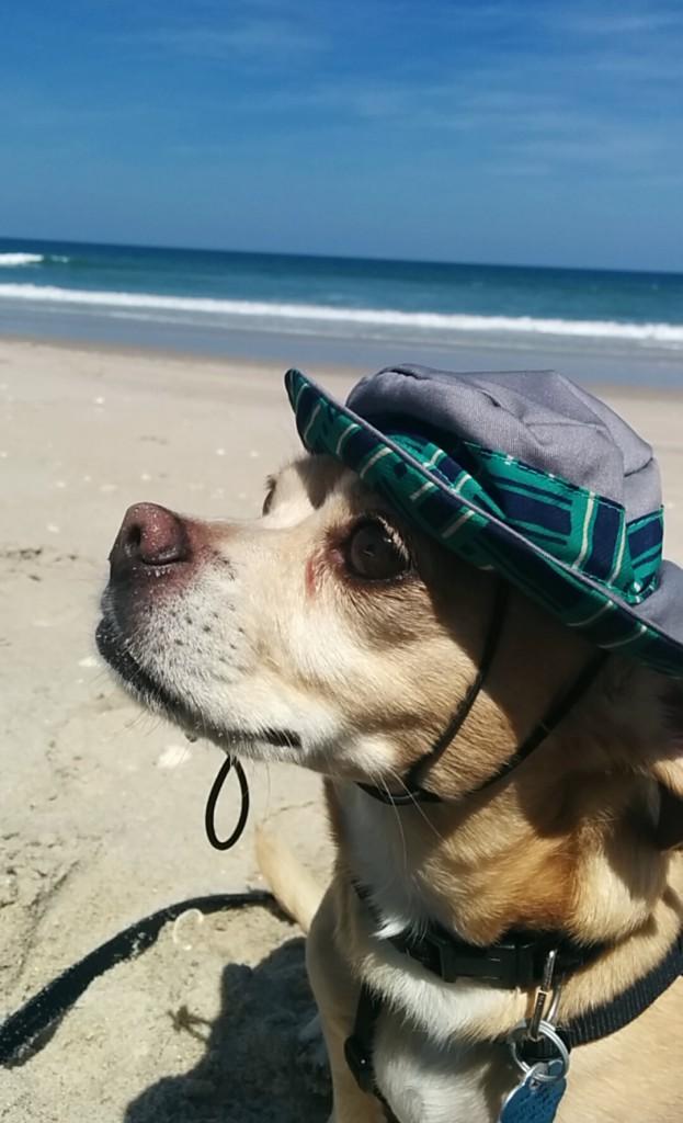 beach-bum-kona